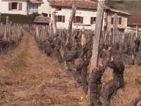 Fronkreisch :: Beaujolais
